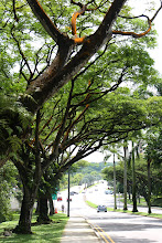 Photo: Year 2 Day 132 - Pretty Orange Lichen on the Trees