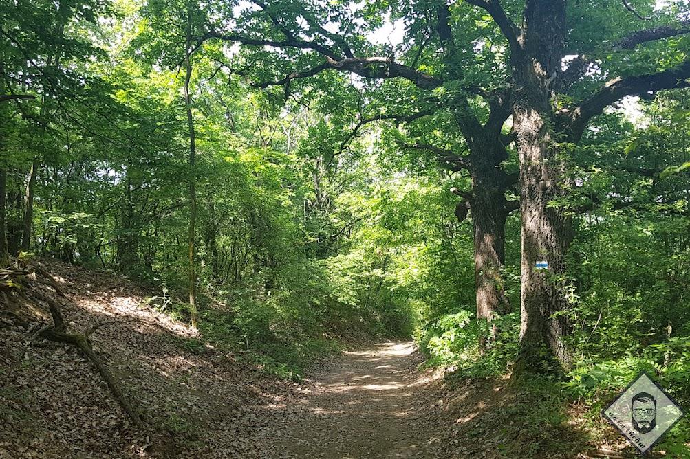 KÉP / Valahol a cserháti erdőkben