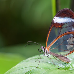 Transparency by Gabriel Catalin - Animals Insects & Spiders (  )