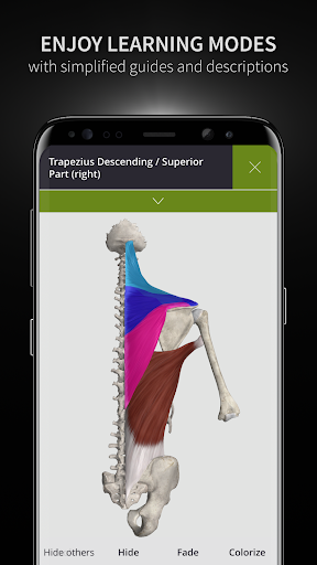 Anatomyka - Interactive 3D Human Anatomy 1.1.1 screenshots 3