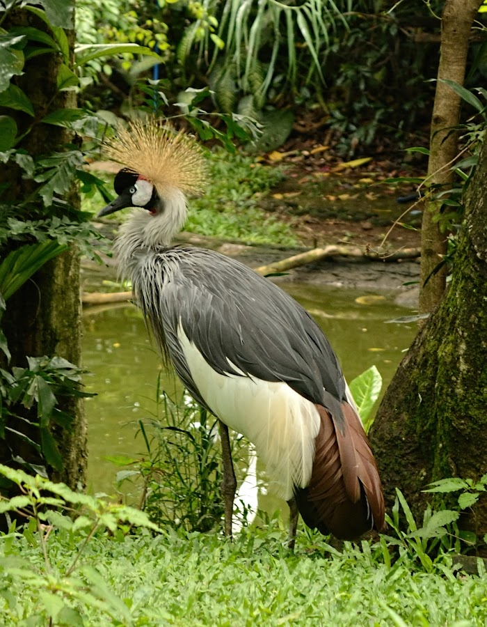 by ADe ANkas - Animals Birds (  )