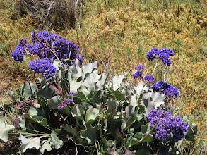 Photo: Salt Marsh flowers