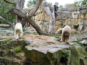 Photo: Oha, Gianna kommt zu Knut ;-)