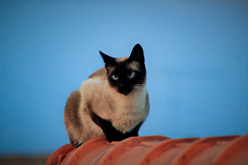 La gatta sul tetto che.. di AlexSandra