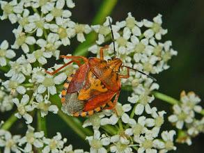 Photo: Beauty of Bugs