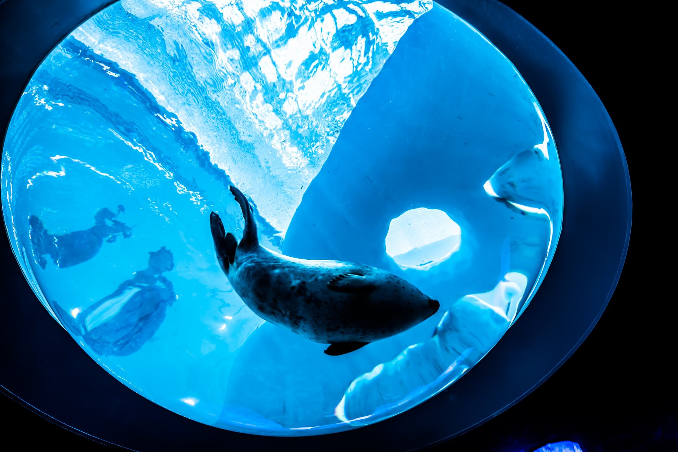 Osaka Aquarium KAIYUKAN Ringed Seal1