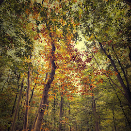 a place in the shadow by Egon Zitter - Landscapes Forests ( forestview, autumn, fall, path, forest, woods )
