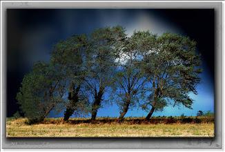 Foto: 2013 05 27 - P 199 F - Bäume vor dem Berg