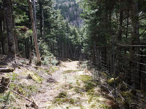 暫く林道を進む