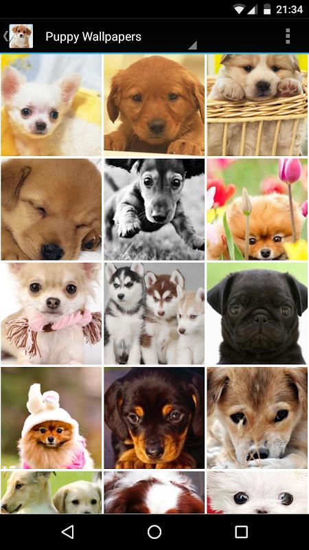 Puppy Wallpapers screenshots