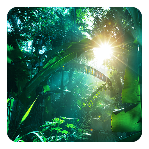 Jungle Live Wallpaper Apps On Google Play