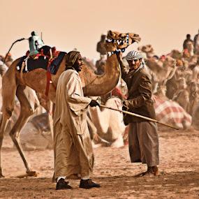 Camel Racing by Dj Hostalero - News & Events World Events ( ksa, camel, janadriyah, djmaculet, race )