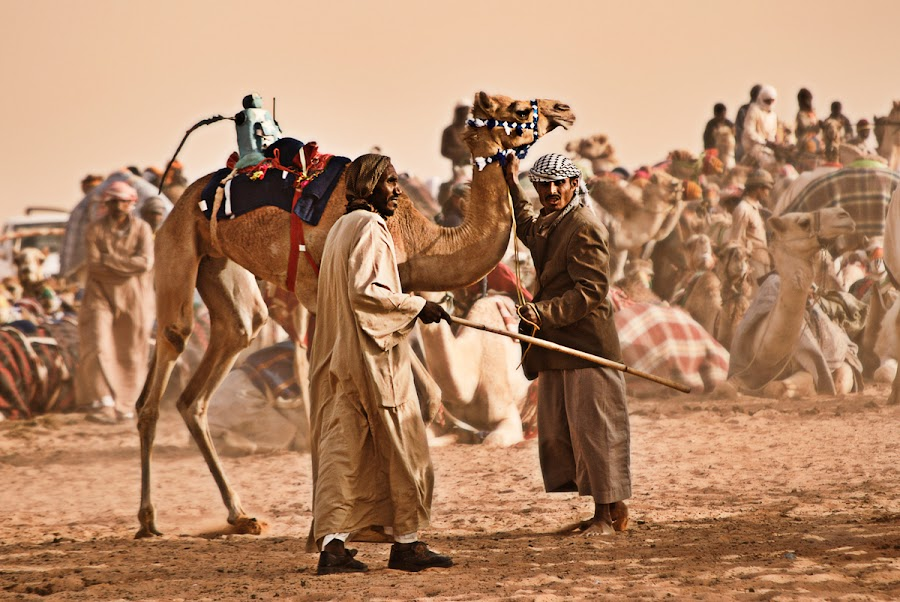 Camel Racing by Dj Hostalero - News & Events World Events ( ksa, camel, janadriyah, djmaculet, race )
