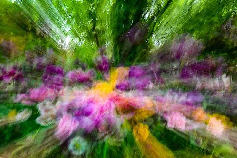 Primavera: esplosione di colore di erreemme