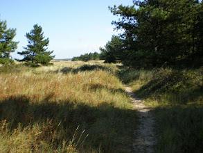 Photo: Norfolk Coast Path - From Brancaster to Warham - Crossing Burrow Gap