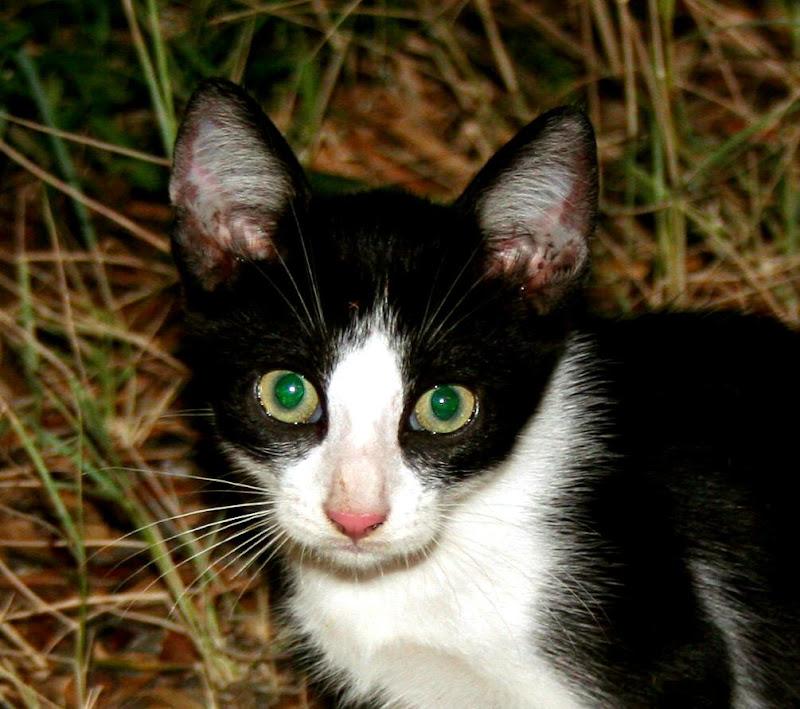 occhi smeraldo di Tikotako