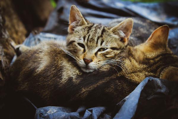 legami felini  di federica ambrogio