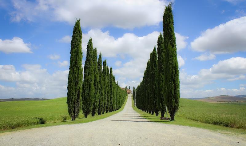 Terra di Toscana di serikla