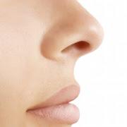 Сонник нос