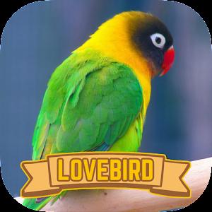 download Master Lovebird Kicau Juara apk