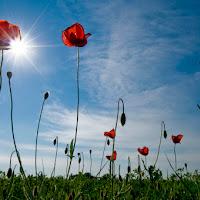 Sole in fiore di