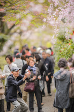 """Photo: This photo appeared in an article on my blog on May 2, 2013. この写真は5月2日ブログの記事に載りました。 """"Kyoto's Amazing Haradanien Garden, Part 2"""" http://regex.info/blog/2013-05-02/2254"""