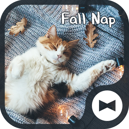 Cat Wallpaper Fall Nap Theme Icon