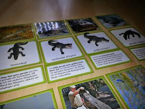 Photo: Lesedose Alligatoren > Endlich Pause