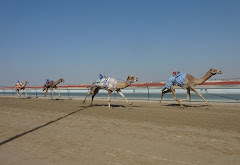 Visiter Dubai New Camel City