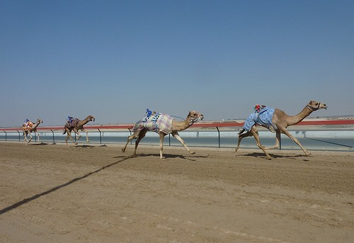 Photo Dubai New Camel City
