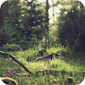 Green Forest – HD Backgrounds icon