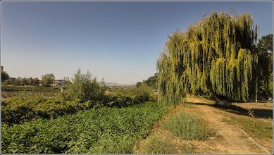 Photo: Salcie (Salix) - din Turda, Parcul Central - 2019.09.16