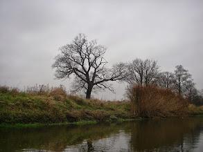 Photo: dużo fajnych drzew