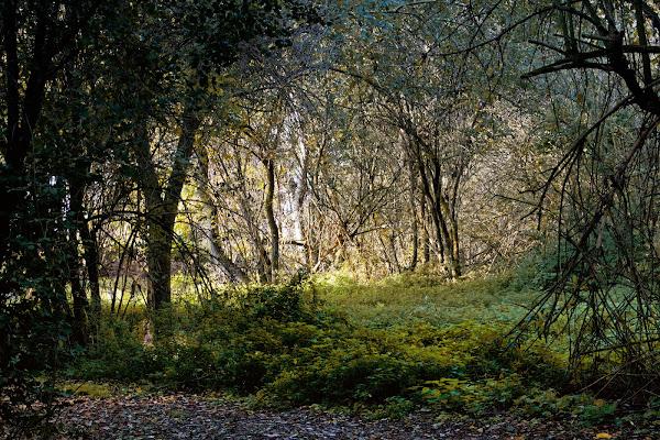la magia del bosco di Fotodiale