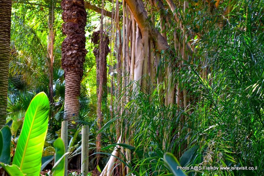 В тропическом саду Тель Авива. Экскурсия по Тель Авиву.