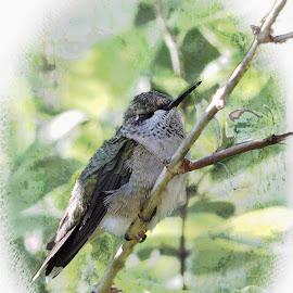 Up close and personal by Melissa Davis - Digital Art Animals ( bird, tree, hummingbird, nectar, missysphotography )