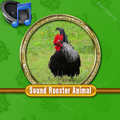 Sound Rooster Mp3