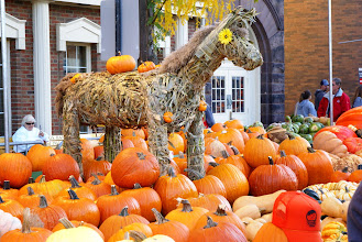 Photo: A straw horse guards the pumpkins