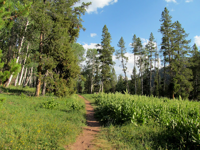 Beginning of the trail