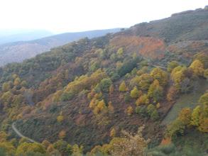 Photo: con buenos bosques