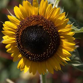 by Elaine Hill - Flowers Single Flower (  )