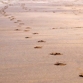 footprints in the sand by Marc Lawrence - Landscapes Beaches ( sand, footprints, summer, beach, lonely )