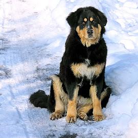 by Andjela Miljan - Animals - Dogs Portraits (  )