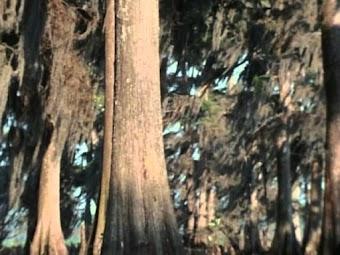 Swamp Bear -- Part 1