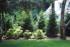 Cypress, the Best Outdoor Wood for DIY Garden Projects
