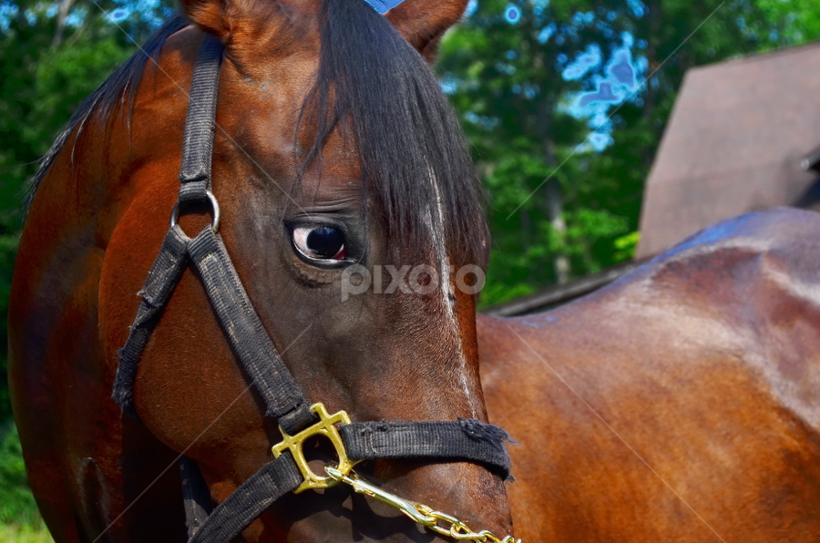 Sad Eyes by Teza Del - Animals Horses