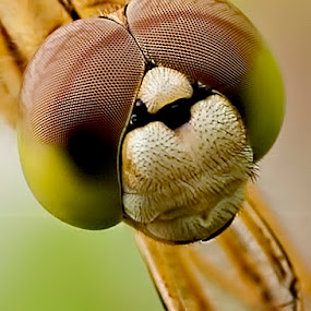 by Henry Novianto - Animals Insects & Spiders