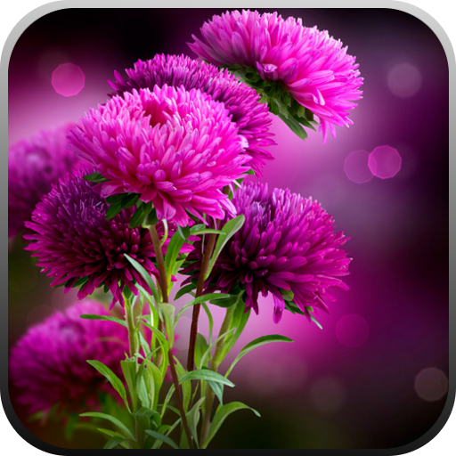Live Wallpaper - Flowers