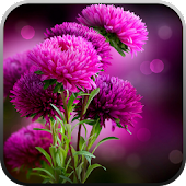 Live Wallpaper - Flowers