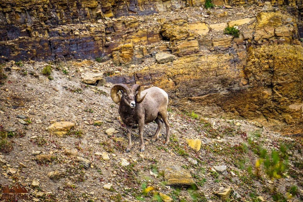 Grinnell Glacier Trail || Glacier National Park || Dirt In My Shoes